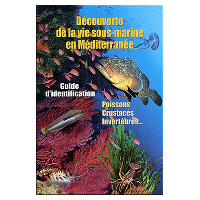 Découverte de la vie sous-marine en Méditerranée
